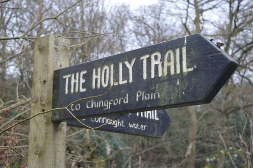 The Holly Trail in Epping Forest